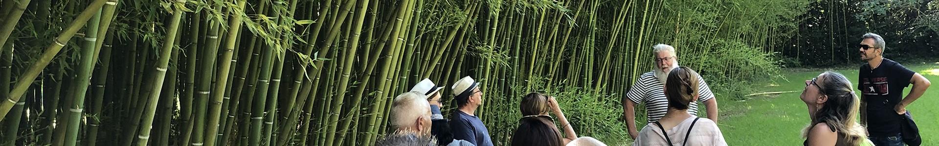 Istres Tourisme, le Club découvrez la bambouseraie de Sulauze et le foin de Crau