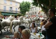 Provençal Traditions