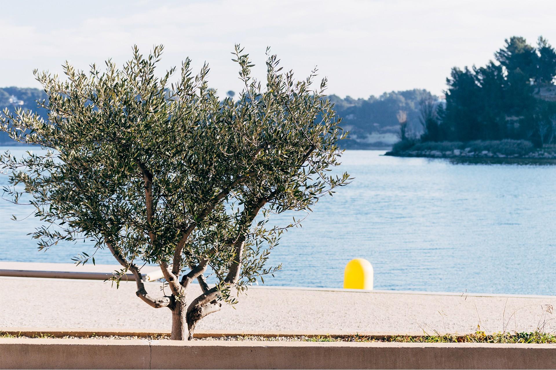 etang-de-l-olivier-tbc-2625