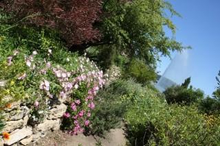 Le Jardin Méditerranéen e tle jet d'eau de l'étang de l'Olivier