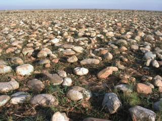Les galets de la plaine de la Crau