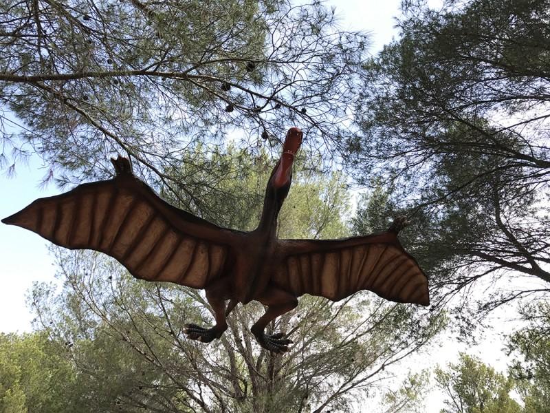 24-cearadactylus-2279