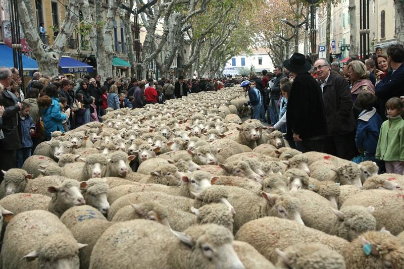 Défilé des Bergers Istres