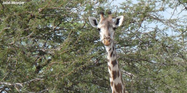 girafe-site-1060
