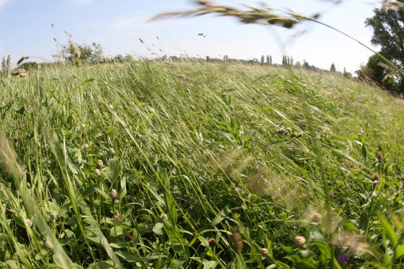 Plaine de la Crau à Istres
