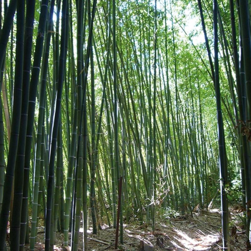 La bambouseraie de Sulauze