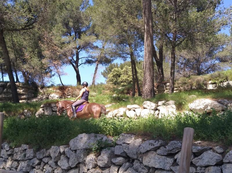 Poney et équitation au centre équestre