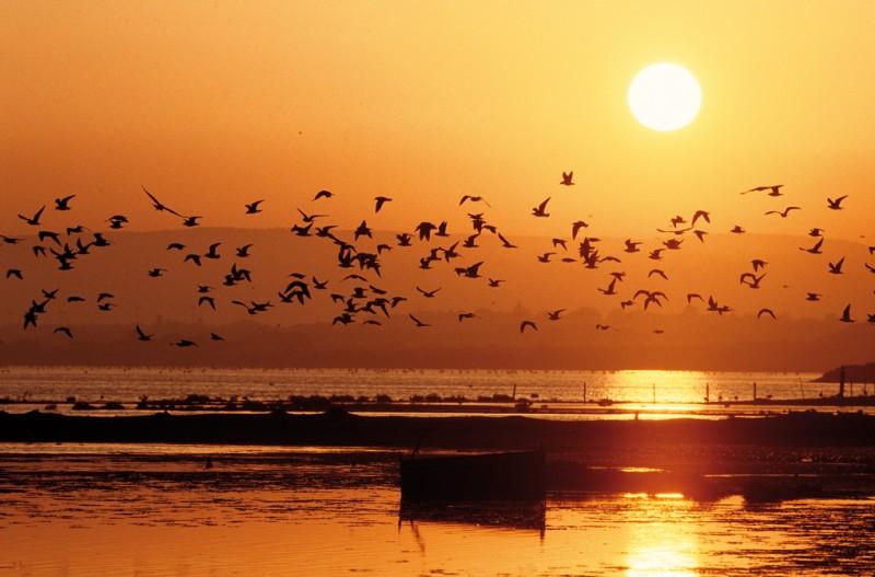 Coucher de soleil - Camargue