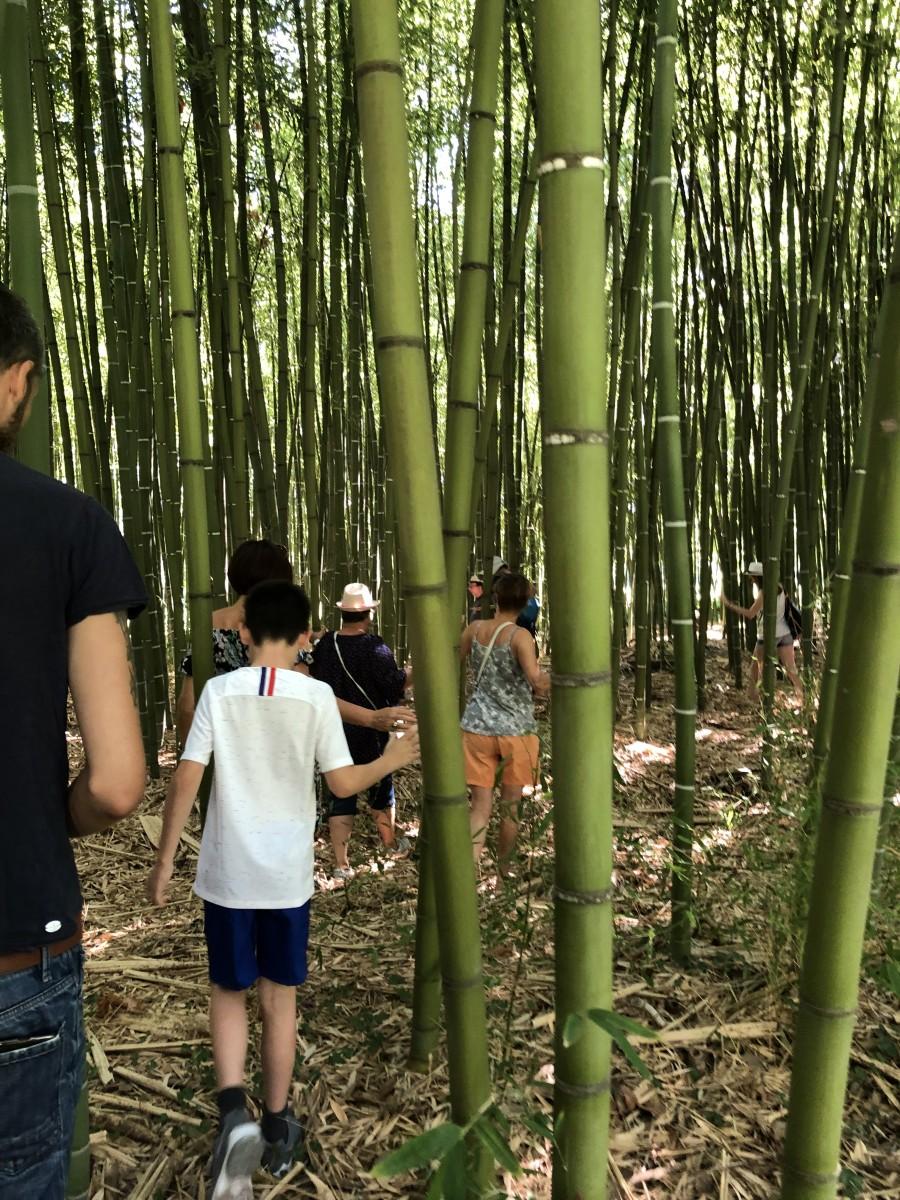 Balade dans la foret de bambous