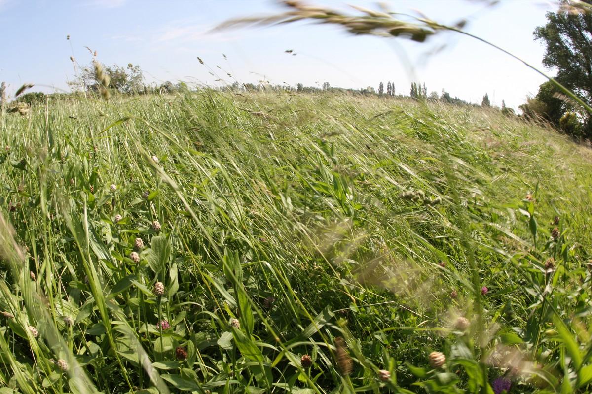 Les prairies de la Crau Humide à Entressen