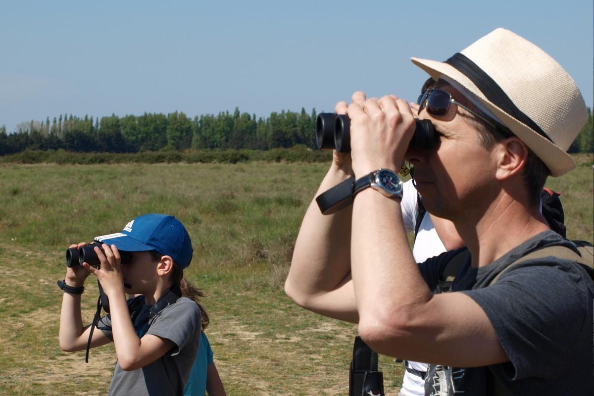 Observation ornithologique dans la plaine de la Crau