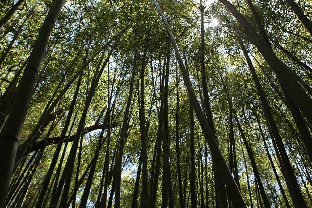bambouseraie-sulauze-recadre-1-190751